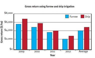 Graph showing gross return using furrow and drip irrigation.