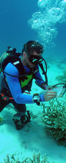 Photograph of a diver assessing the reef
