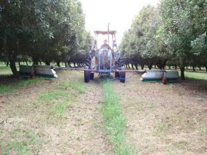 Tractor spraying macadamia crop
