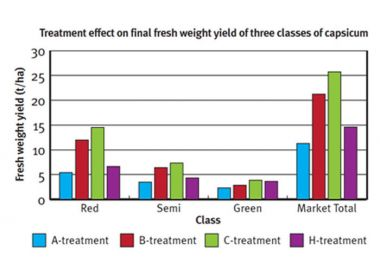 Graph showing treatment effect on final fresh weight yield of three classes of capsicum.