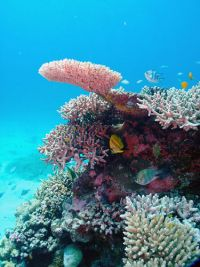 Image courtesy of Great Barrier Reef Marine Park Authority